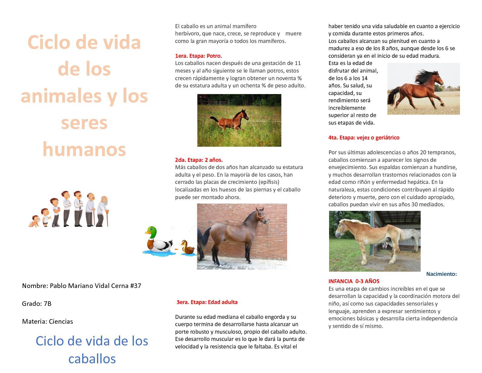Calaméo - Ciclo De Vida De Los Animales Y Los Seres Humanos