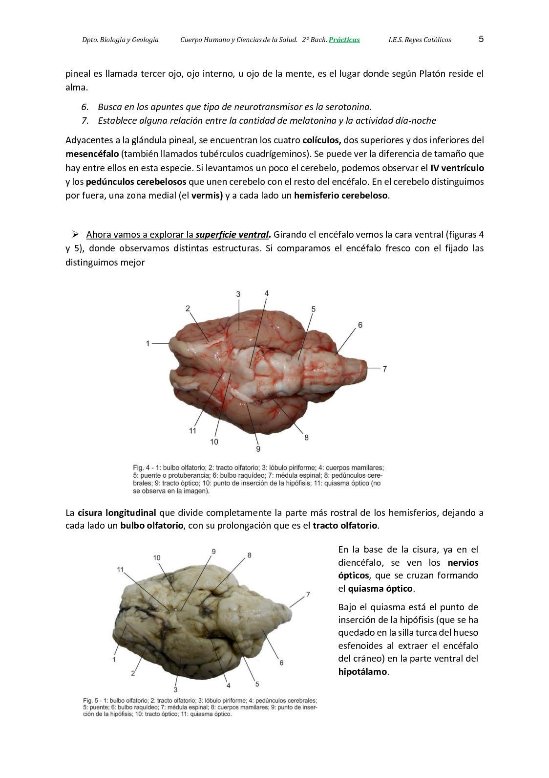 Encantador Qué Día Es La Anatomía De Los Grises Ideas - Anatomía de ...