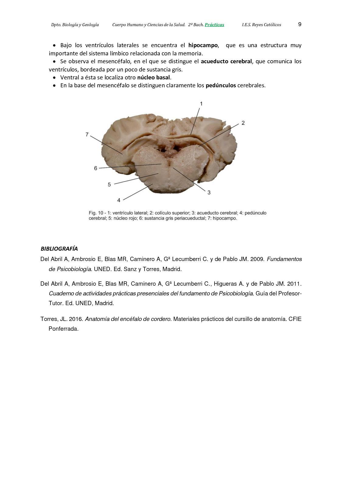 Lujoso Grises Anatomía 3 Foto - Anatomía de Las Imágenesdel Cuerpo ...
