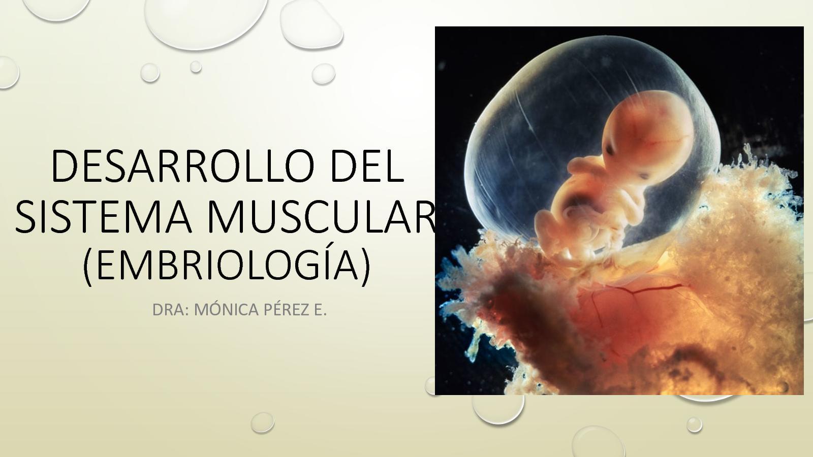 Calaméo - Desarrollo Del Sistema Muscular (Embriología)