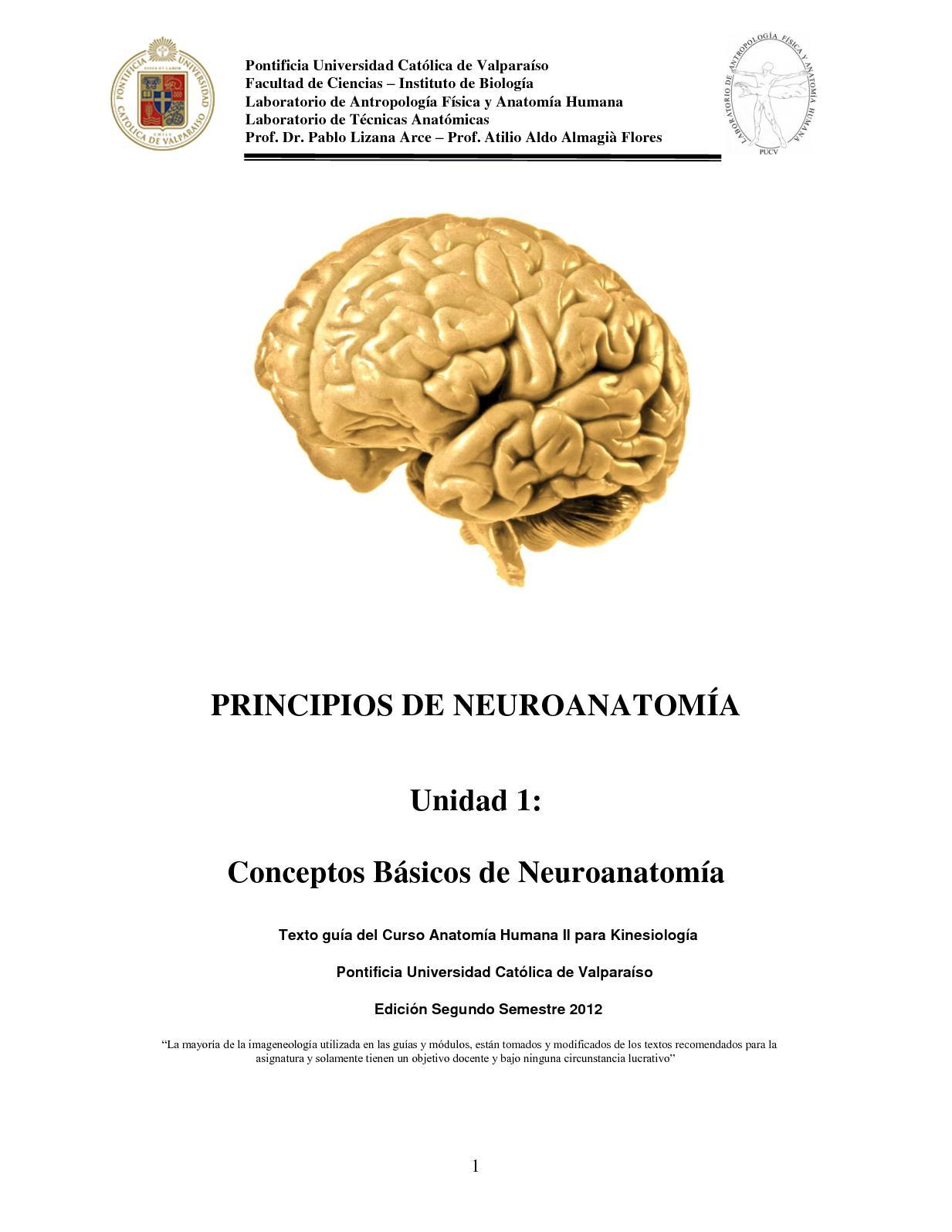 Calaméo - Conceptos Básicos De Neuroanatomía