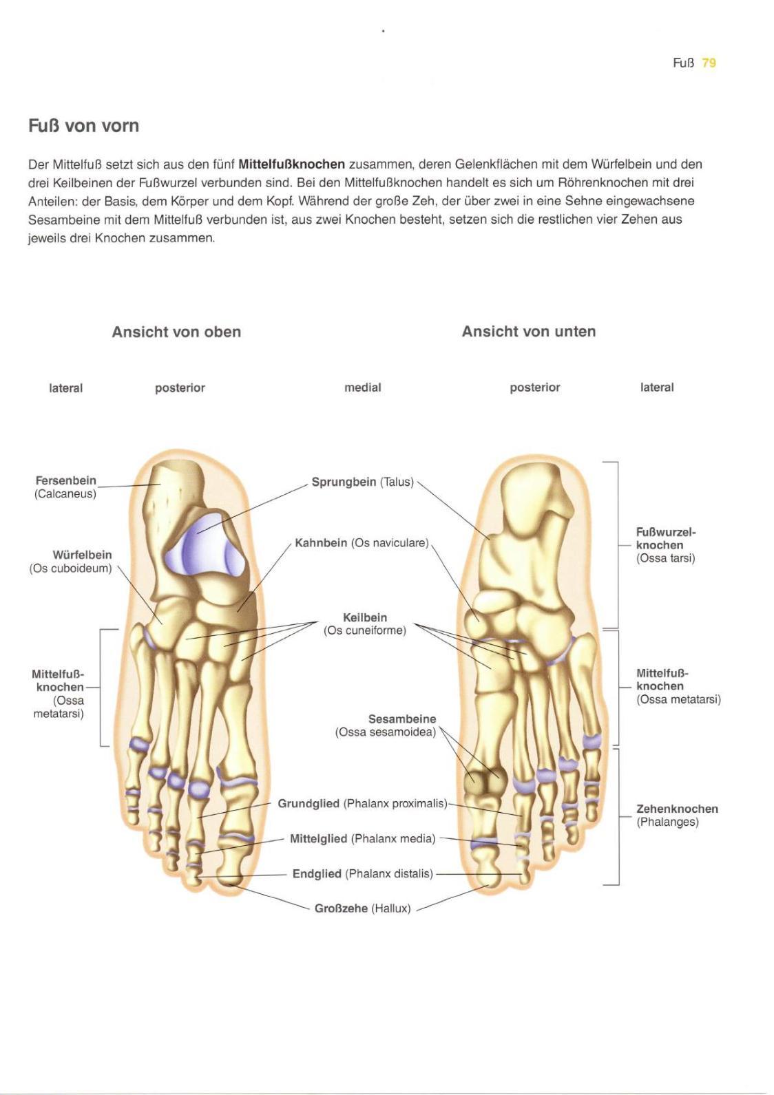 Gesundheitsatlas Anatomie - CALAMEO Downloader