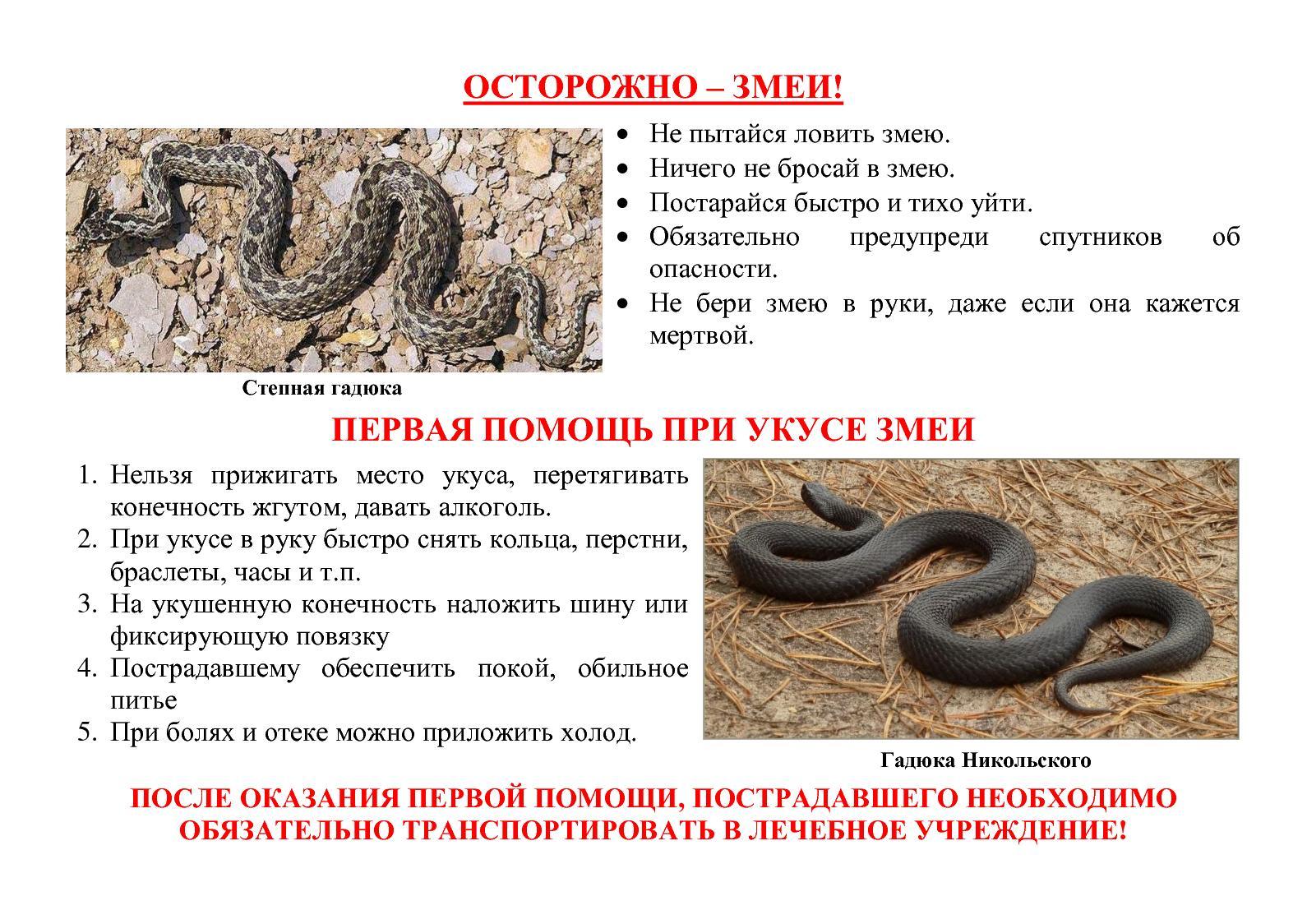 Если укусила змея: что делать, первая помощь при укусе змеи