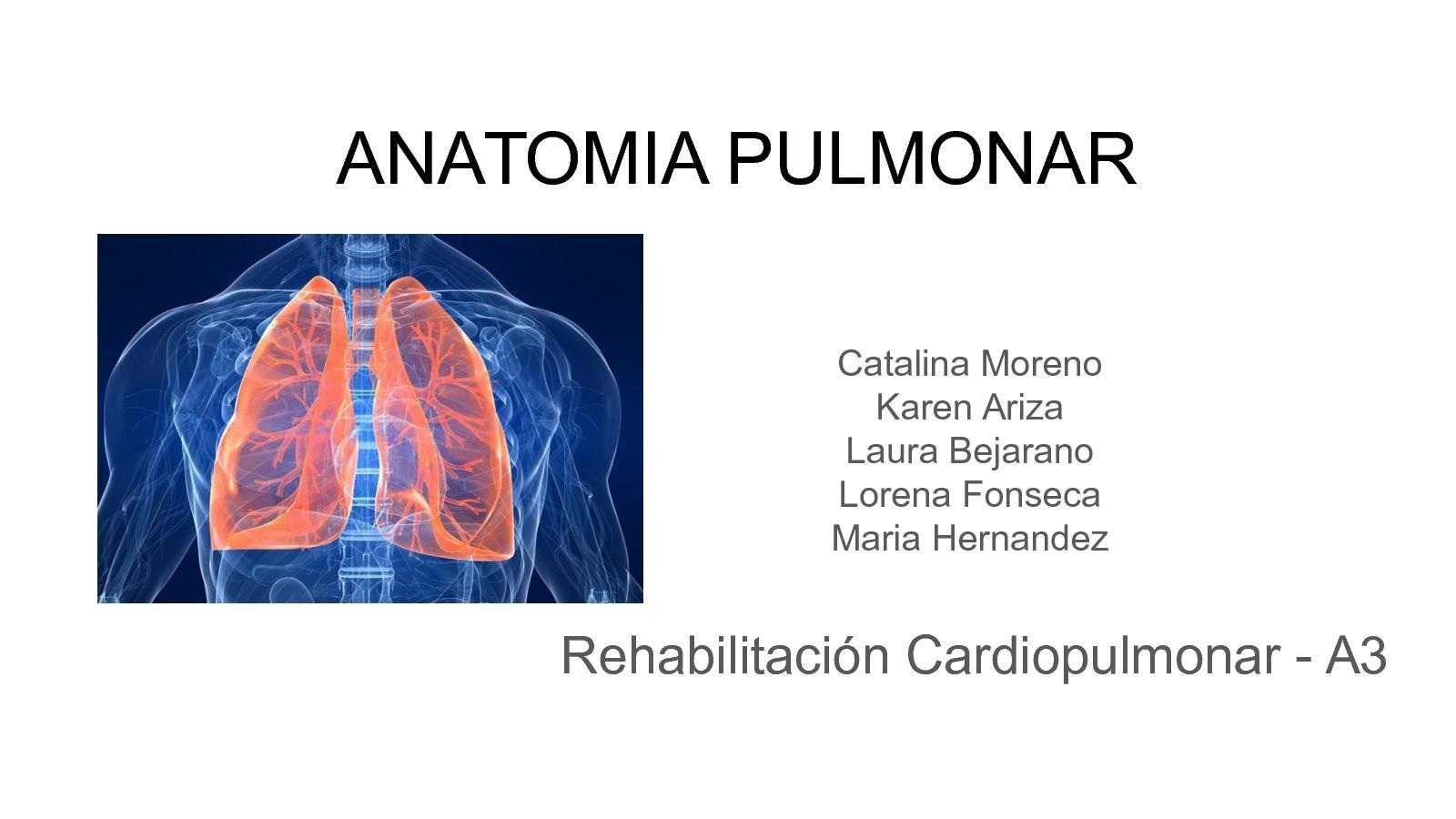 Calaméo - Anatomía Pulmonar