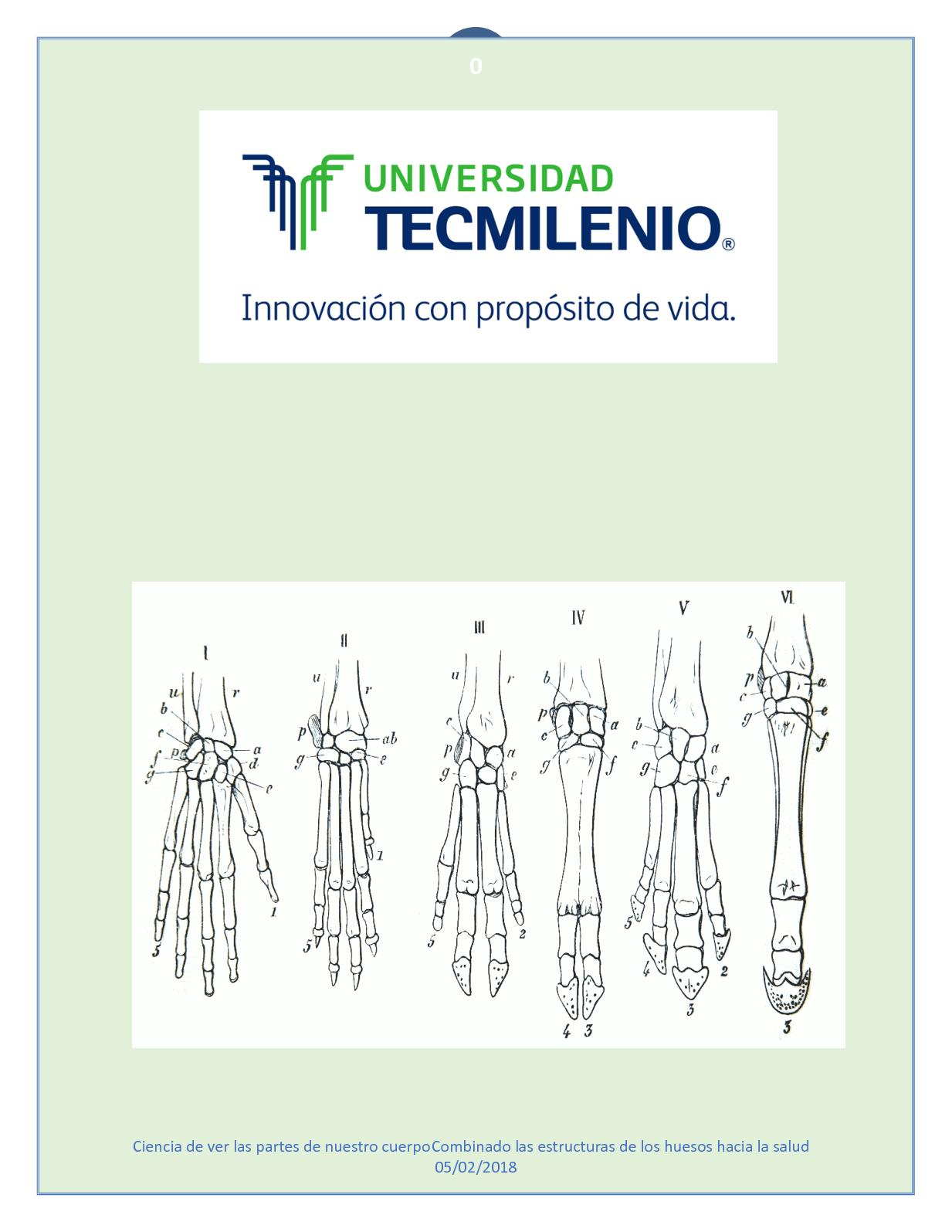 Calaméo - Evidencia 3 Catalago De Morfología
