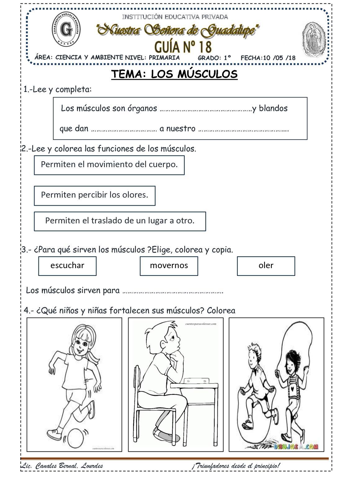 Famoso Diagrama De Músculo Para Los Niños Ilustración - Anatomía de ...