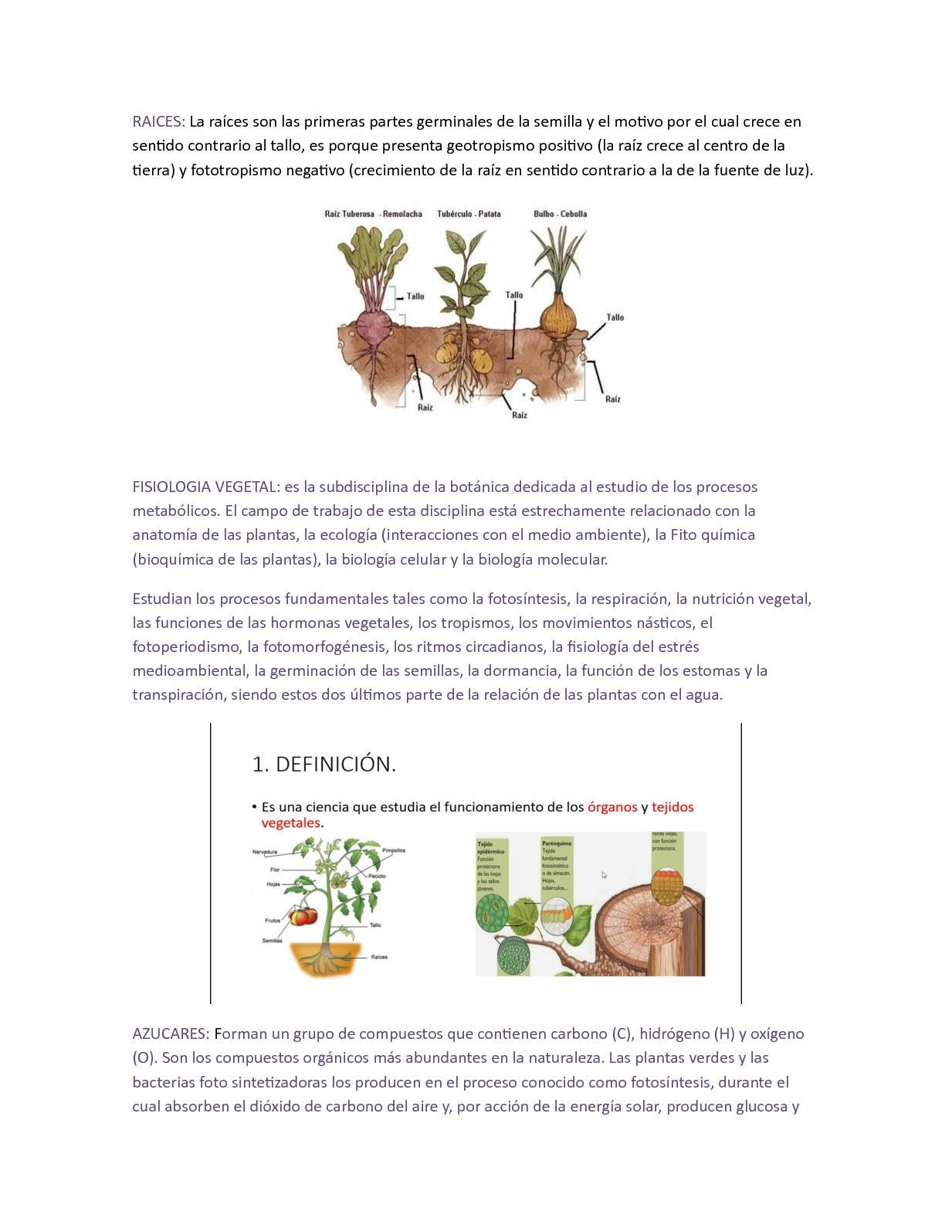 Asombroso Esaú Planta De La Anatomía Imagen - Anatomía de Las ...