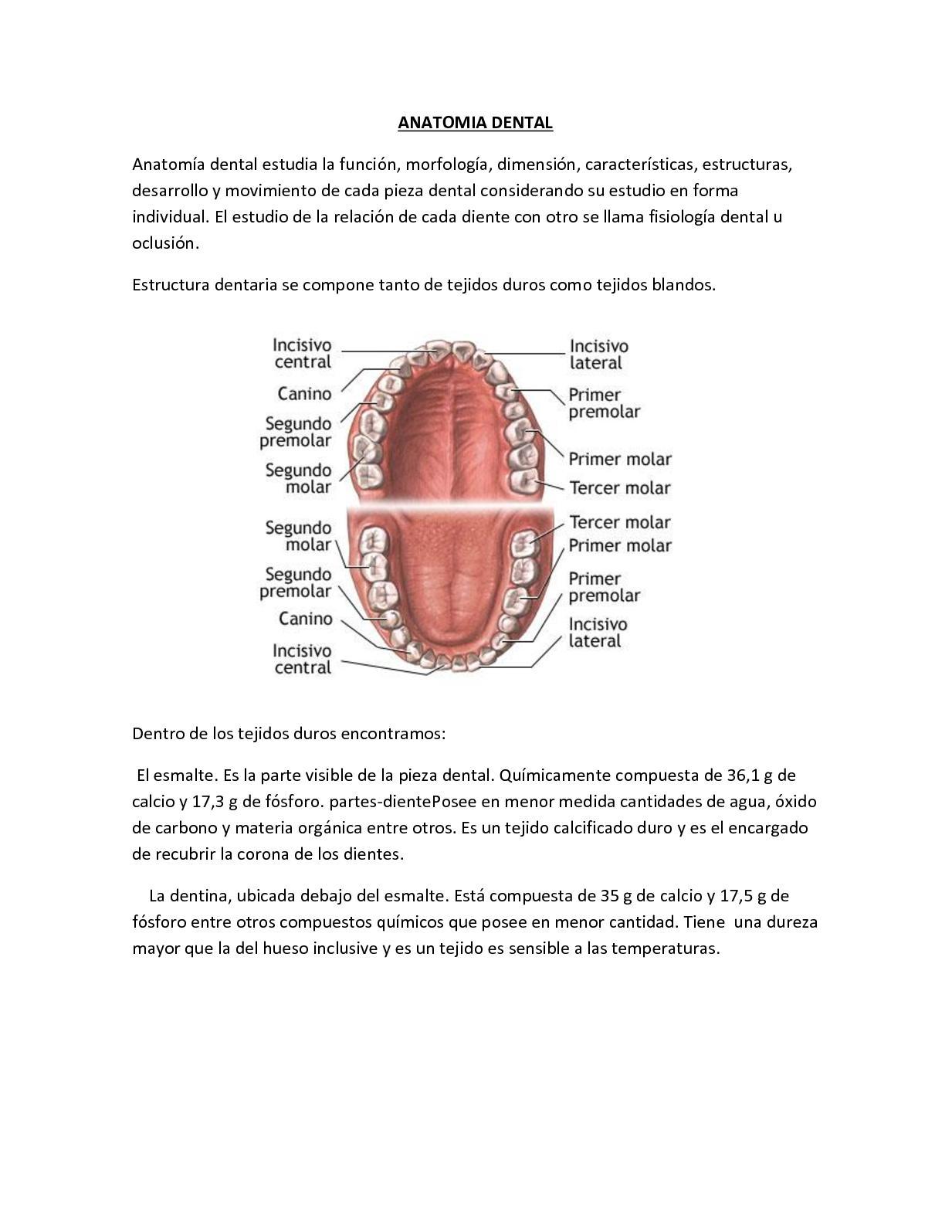 Calaméo - Antomia Dentaria Librito