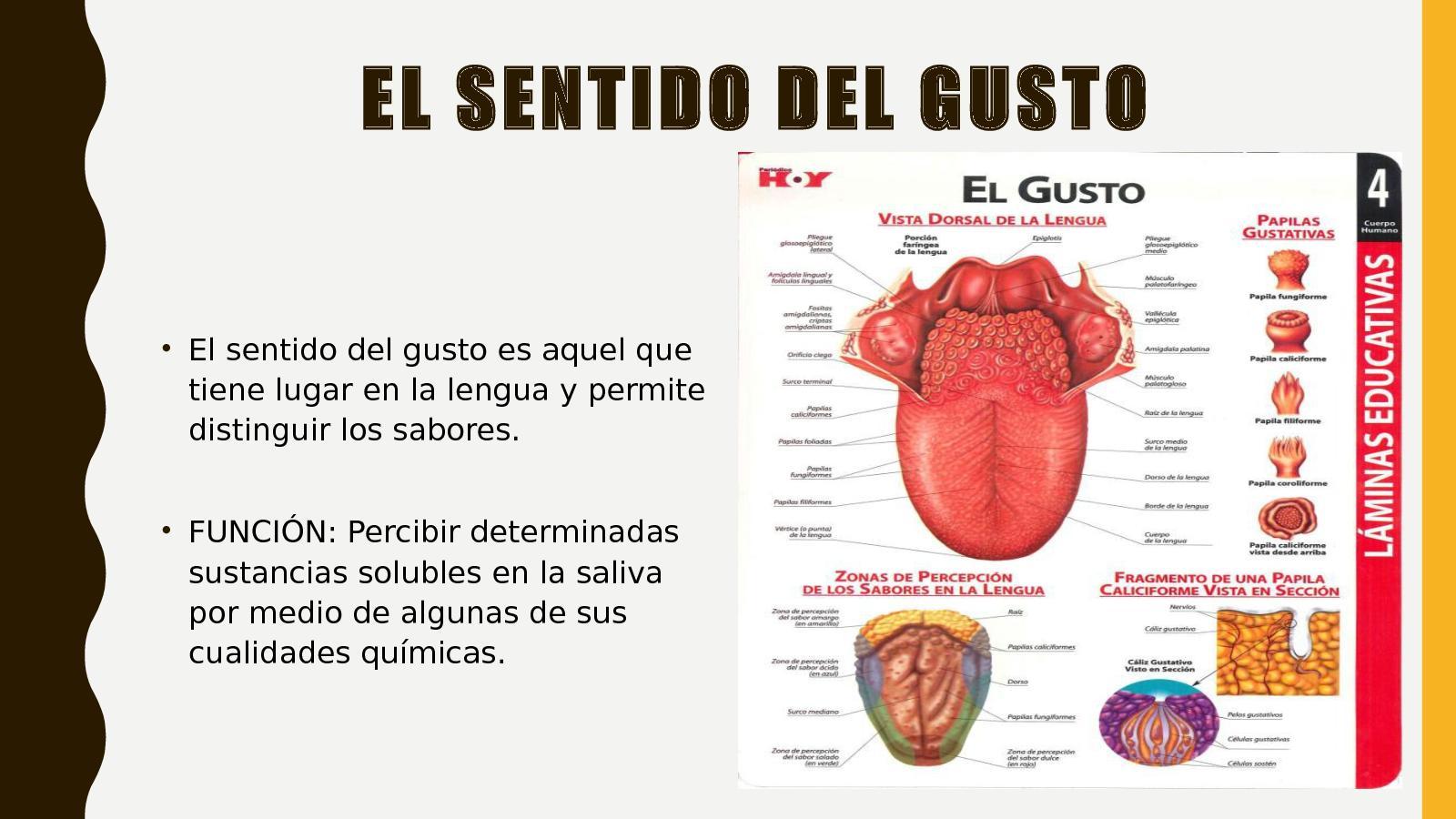 Calaméo - SENTIDO DEL GUSTO