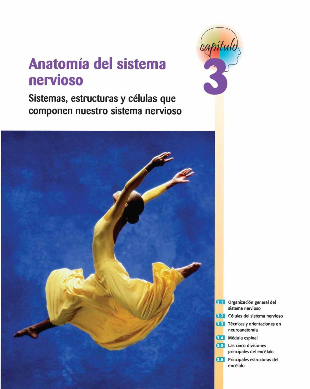 Calaméo - Anatomia Del Sistema Nervisoso