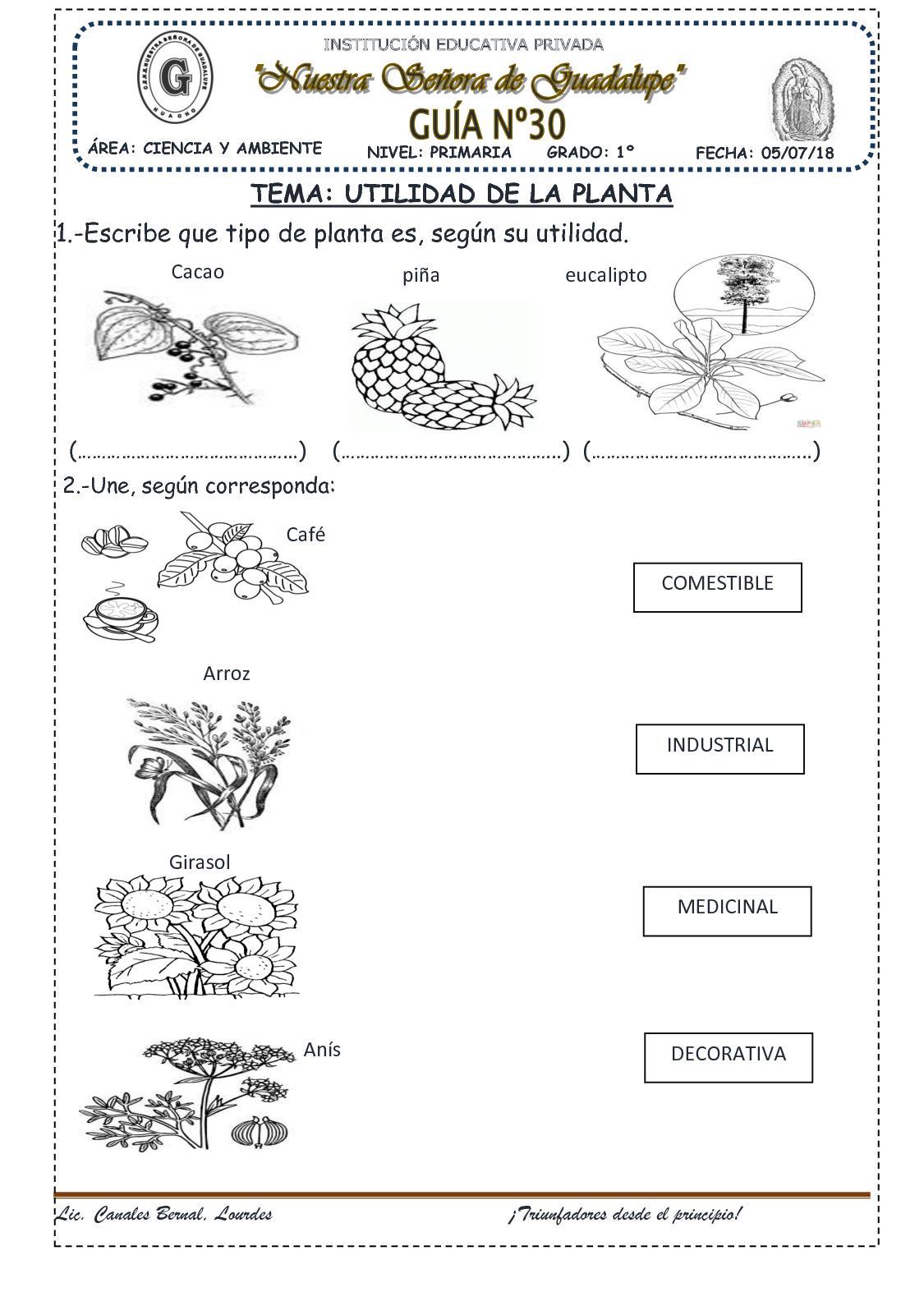 Utilidad De La Planta Ii (30)