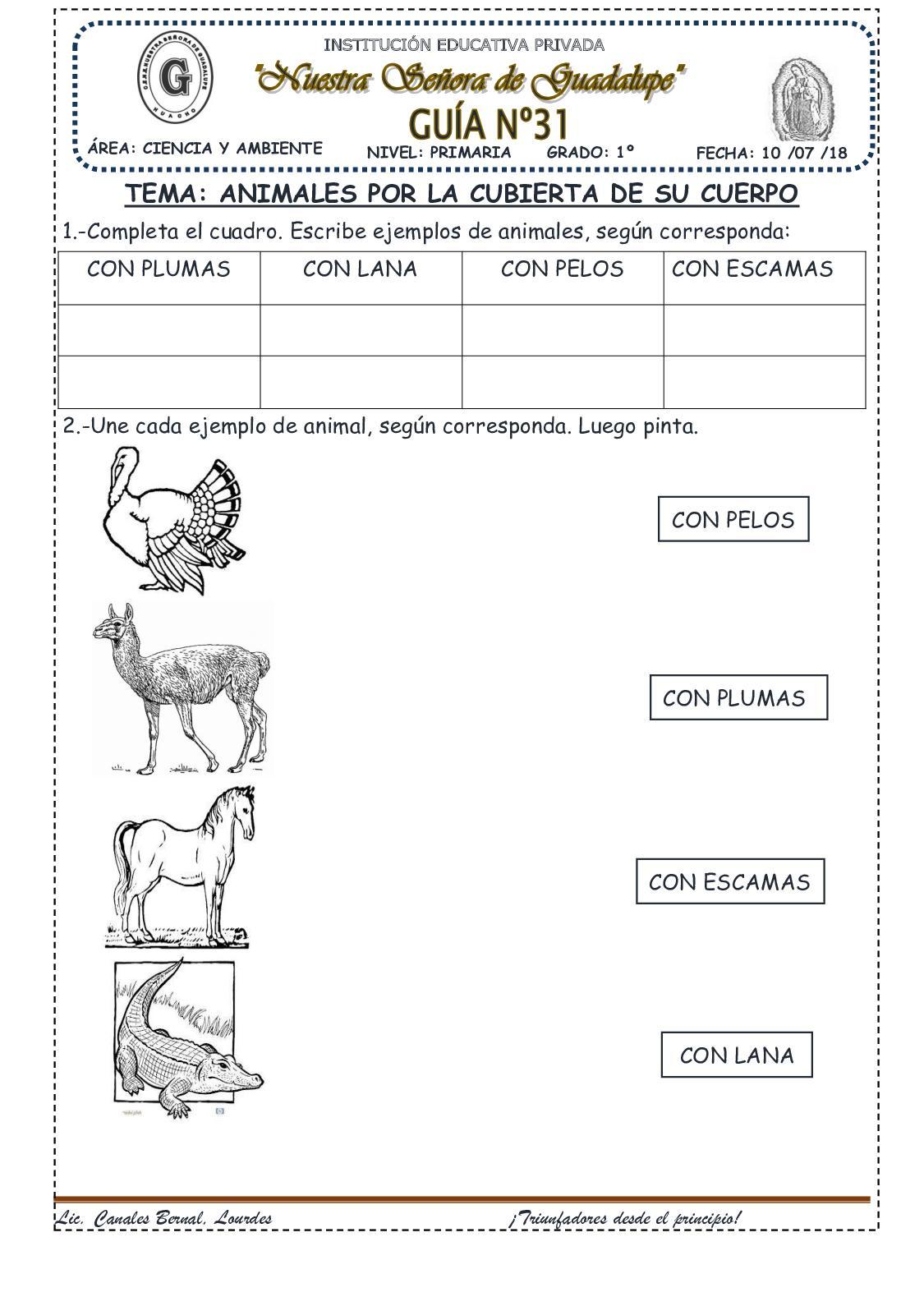 Animales Por La Cubierta De Su Cuerpo(31)