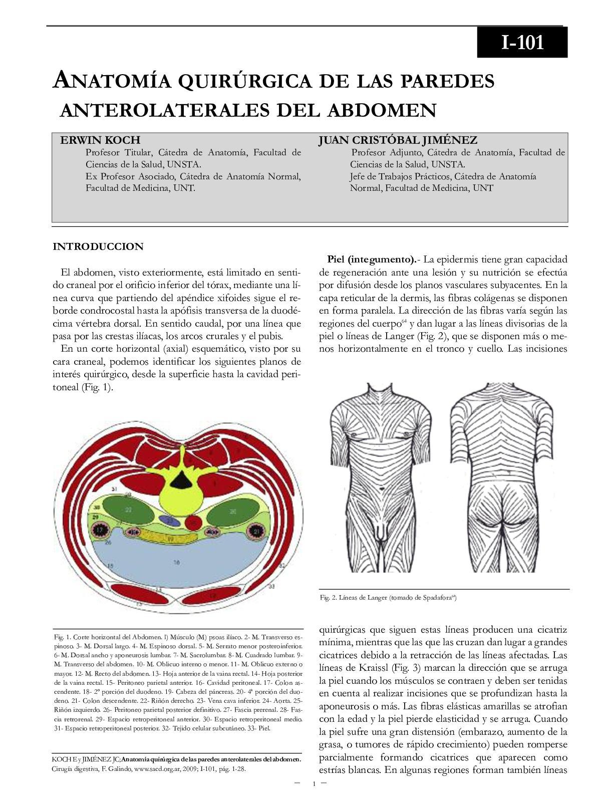 Calaméo - Anatomia Quirurgica De Paredes Abdomen