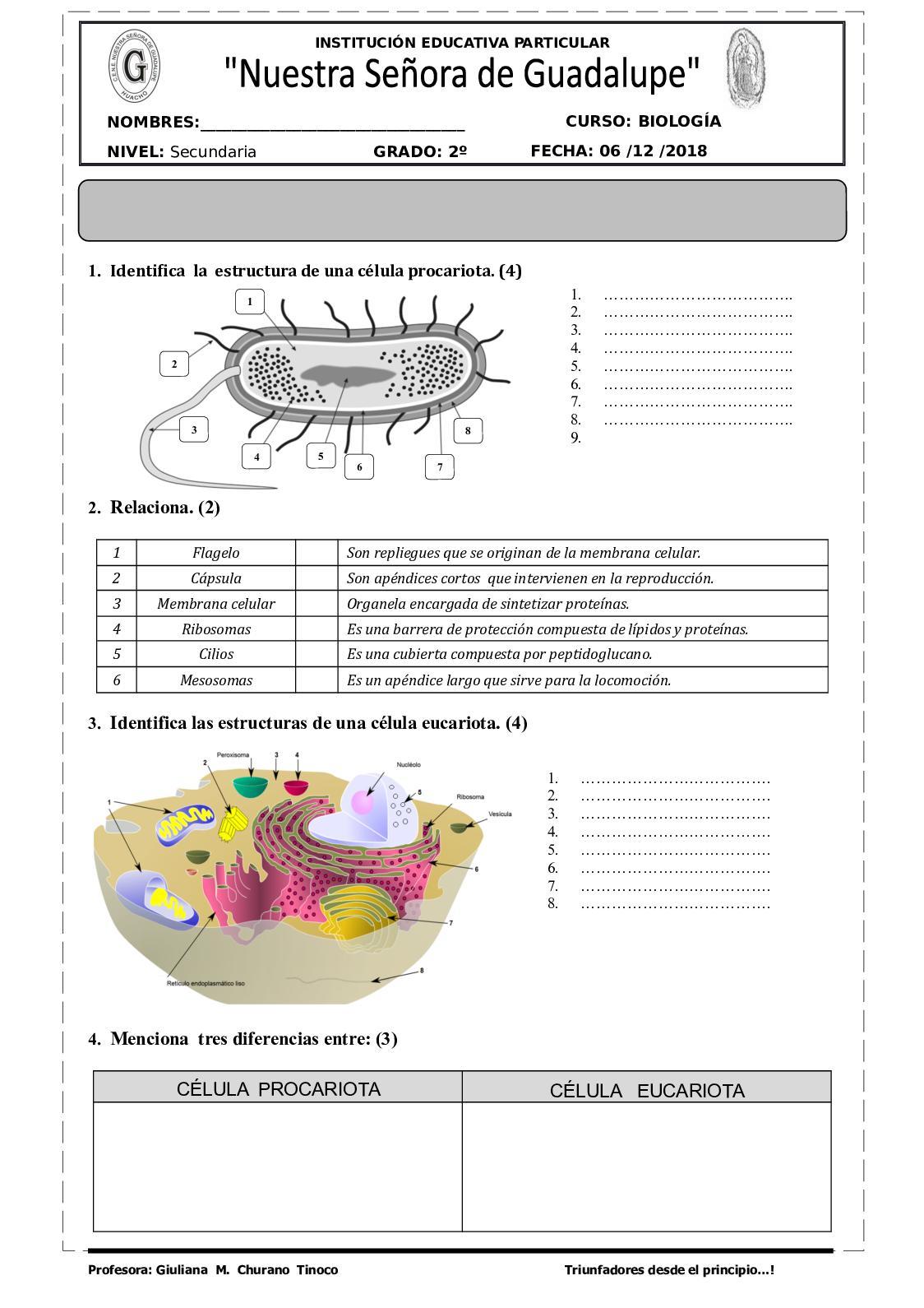 Guía De La Célula Procariota Y Eucariota