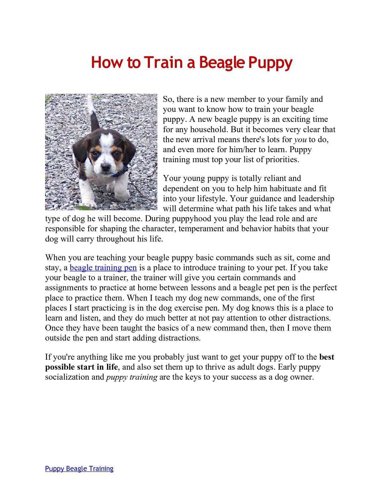 Calameo Beagle Puppy Training