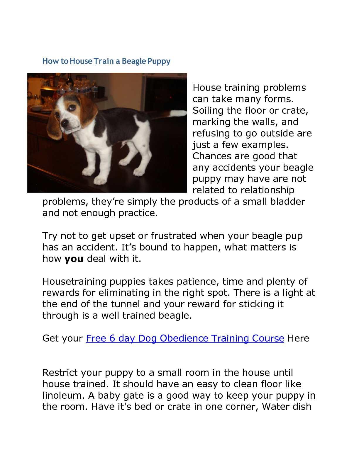 Calameo How To House Train A Beagle Puppy