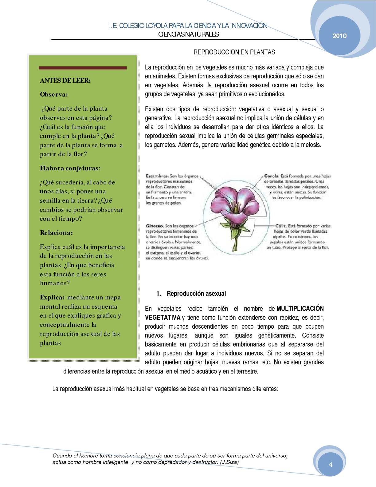 Hepaticas reproduccion asexual