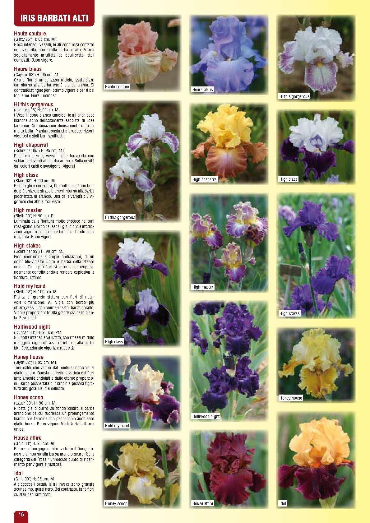 Fiore Giallo 6 Petali.Catalogo Iris Claragarden 2011 Calameo Downloader