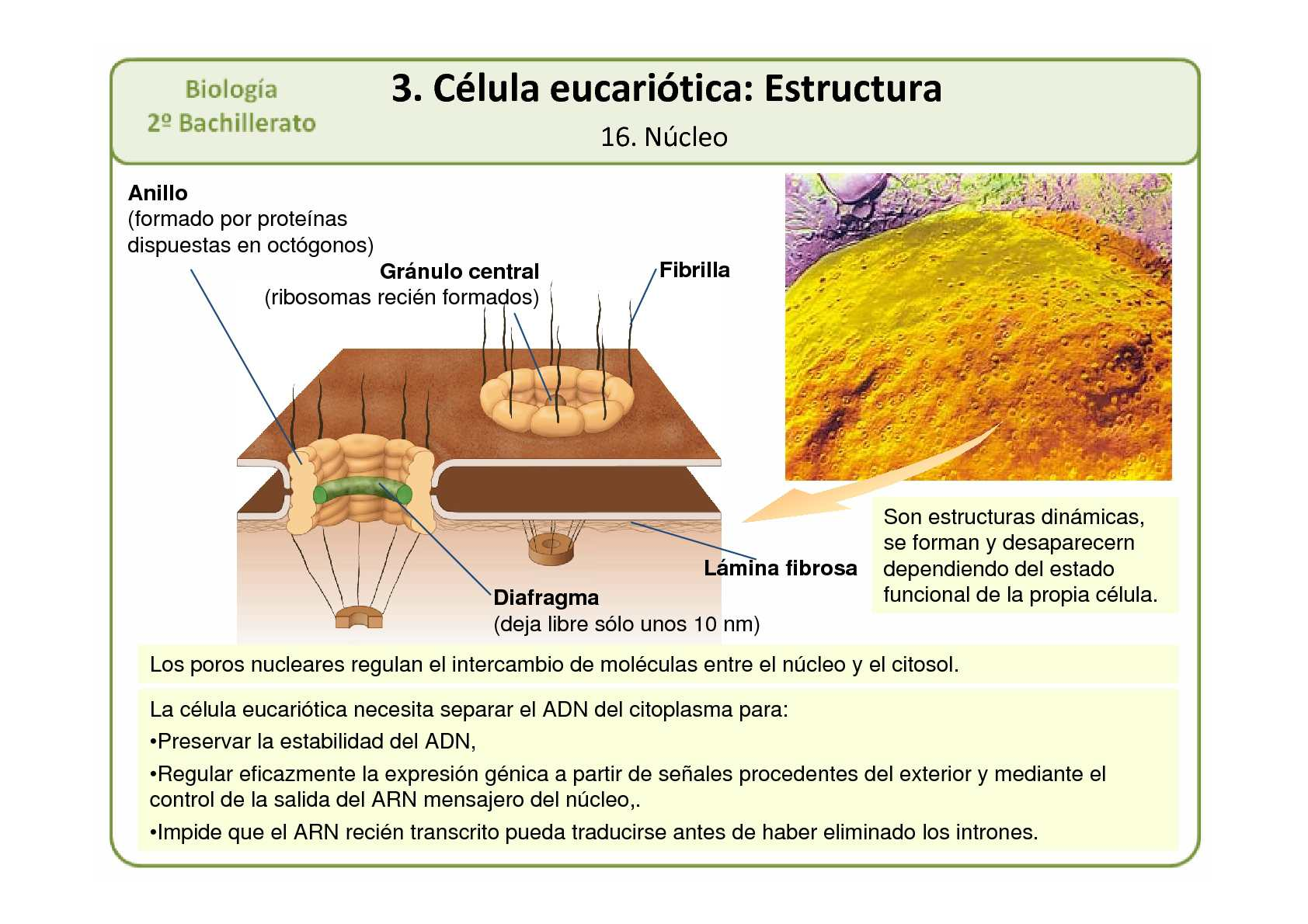 2º Bac Ampliacion Presentacion T 09 Celula Eucariotica 1º
