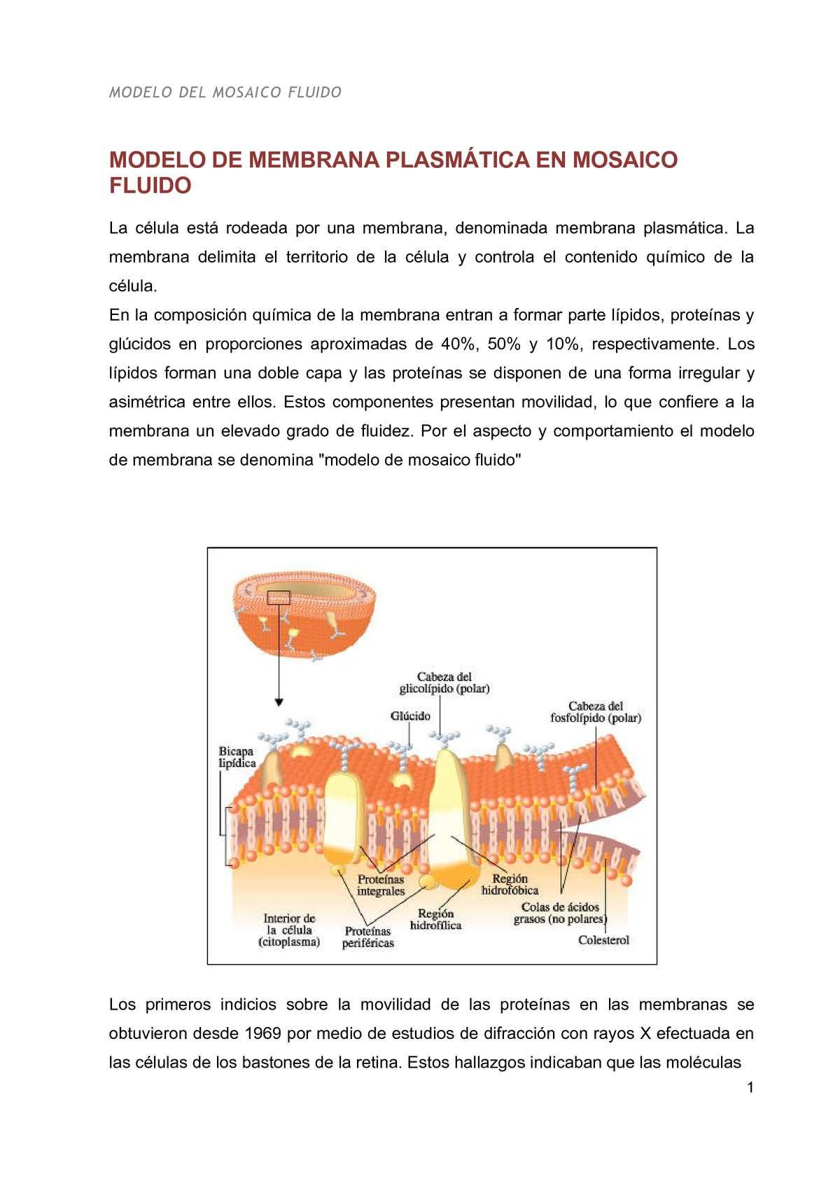 Calaméo Modelo De Membrana Plasmatica En Mosaico Fluido