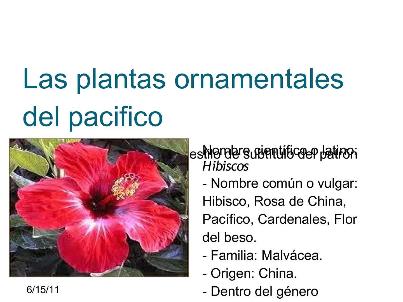 Calam o las plantas ornamentales del pacifico for Concepto de plantas ornamentales