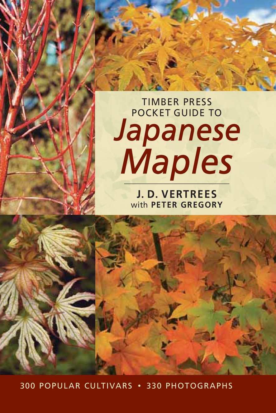 50 fresh japanese acer aconitifolium maples