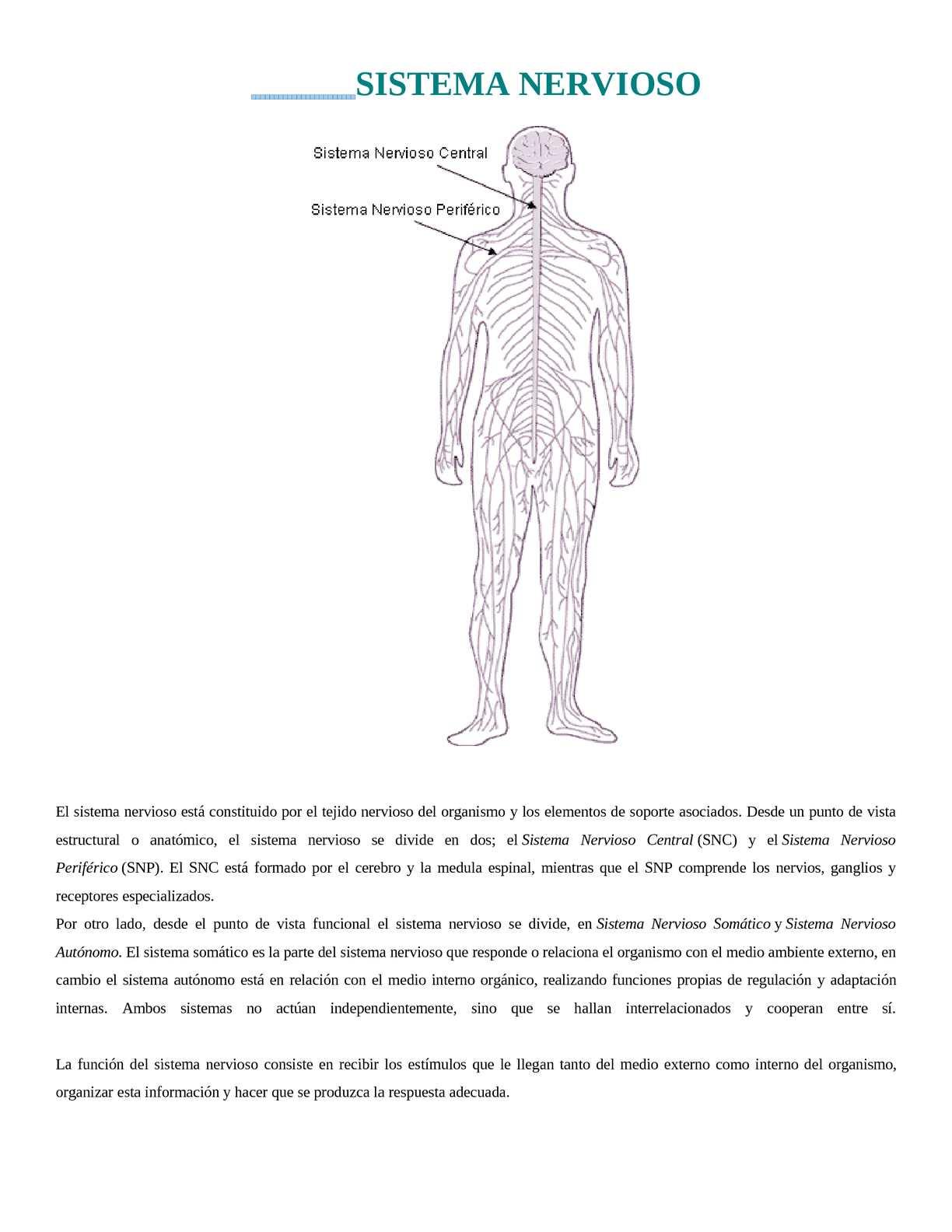 Calaméo Conociendo El Sistema Nervioso