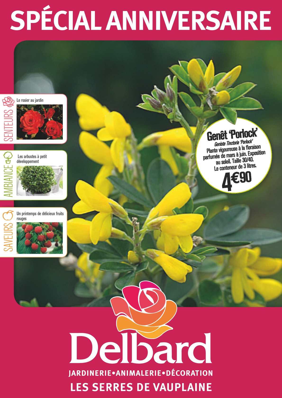 hauteur 28 mm Rosa floraison 10 Vert Foncé buissons