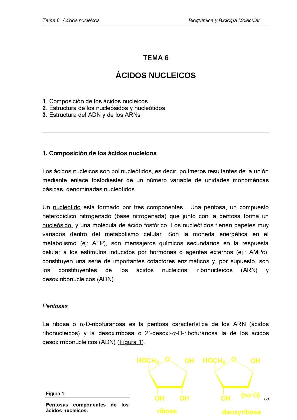 Calaméo Bioquímica De Los ácidos Nucleicos