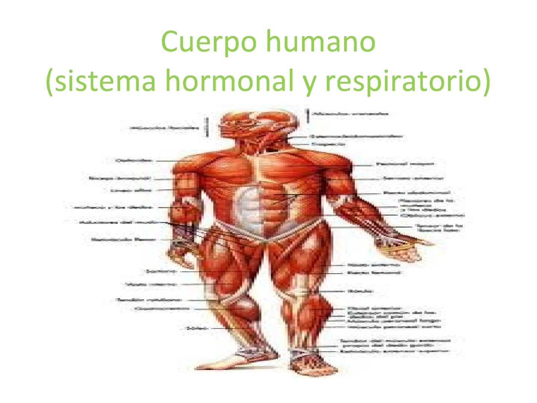 sistema hormonal imagenes