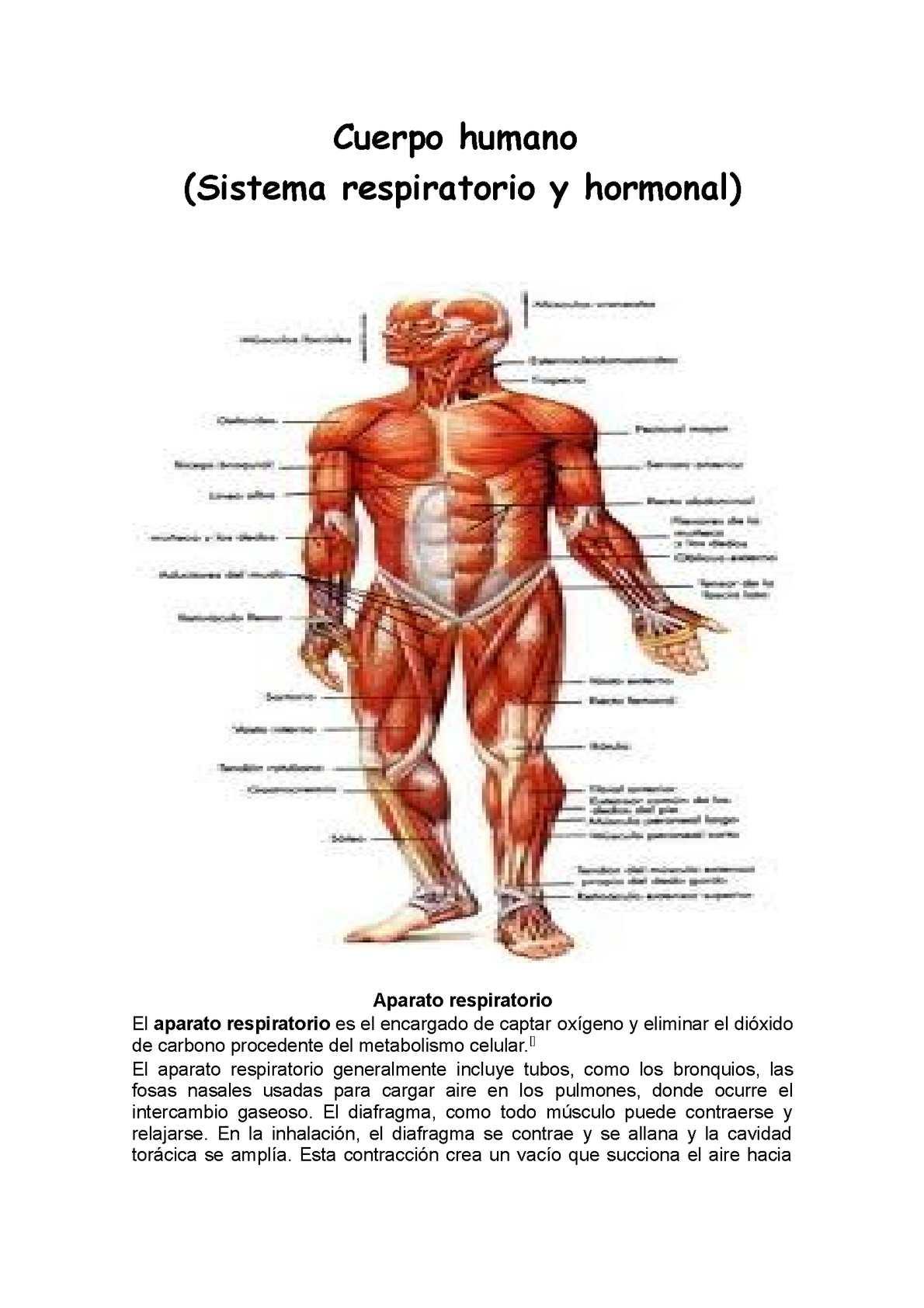 Menos  extra con Acelerar metabolismo
