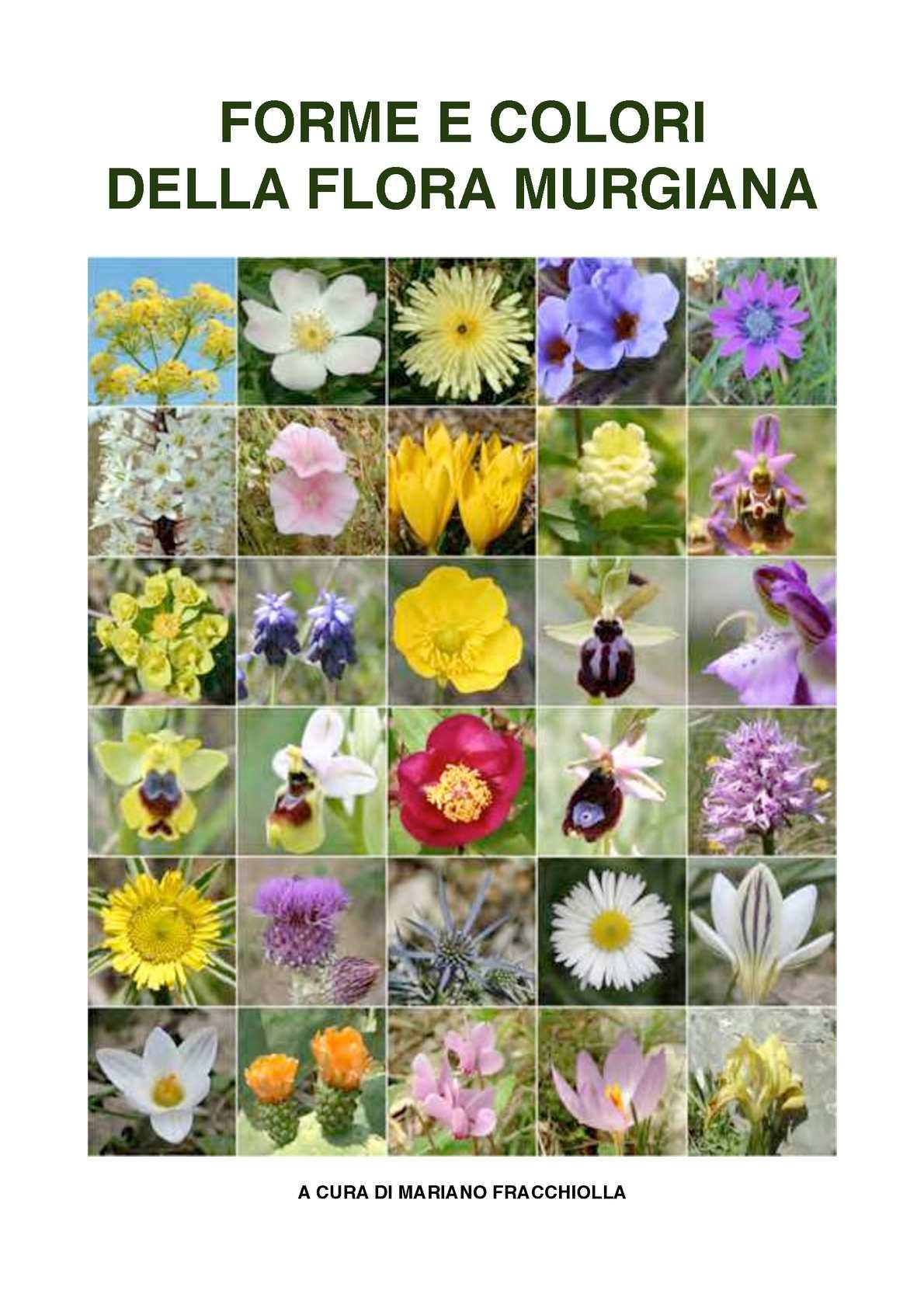 "Eryngium CAMPESTRE /'campo calcatreppola/"" 100 Semi"