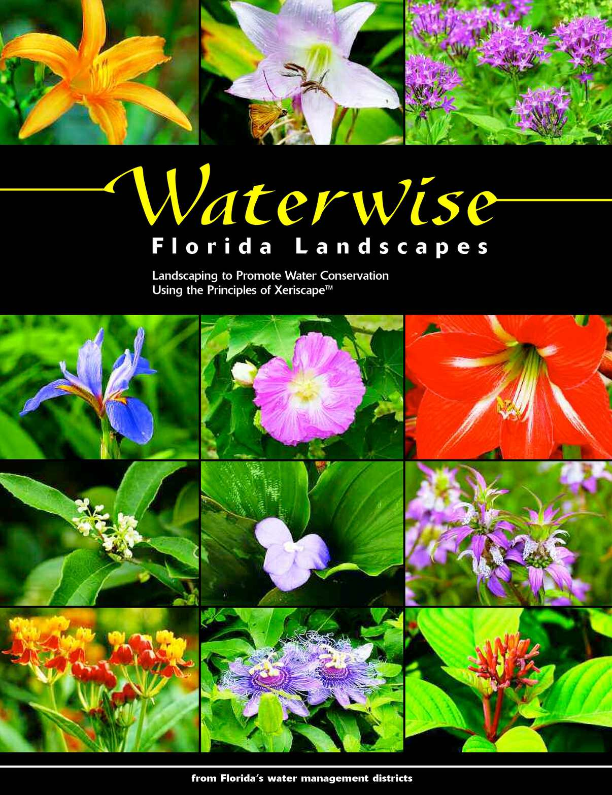 Calameo Waterwise Florida Landscapes Landscaping To Promote Water Conservation Using The Principles Of Xeriscape