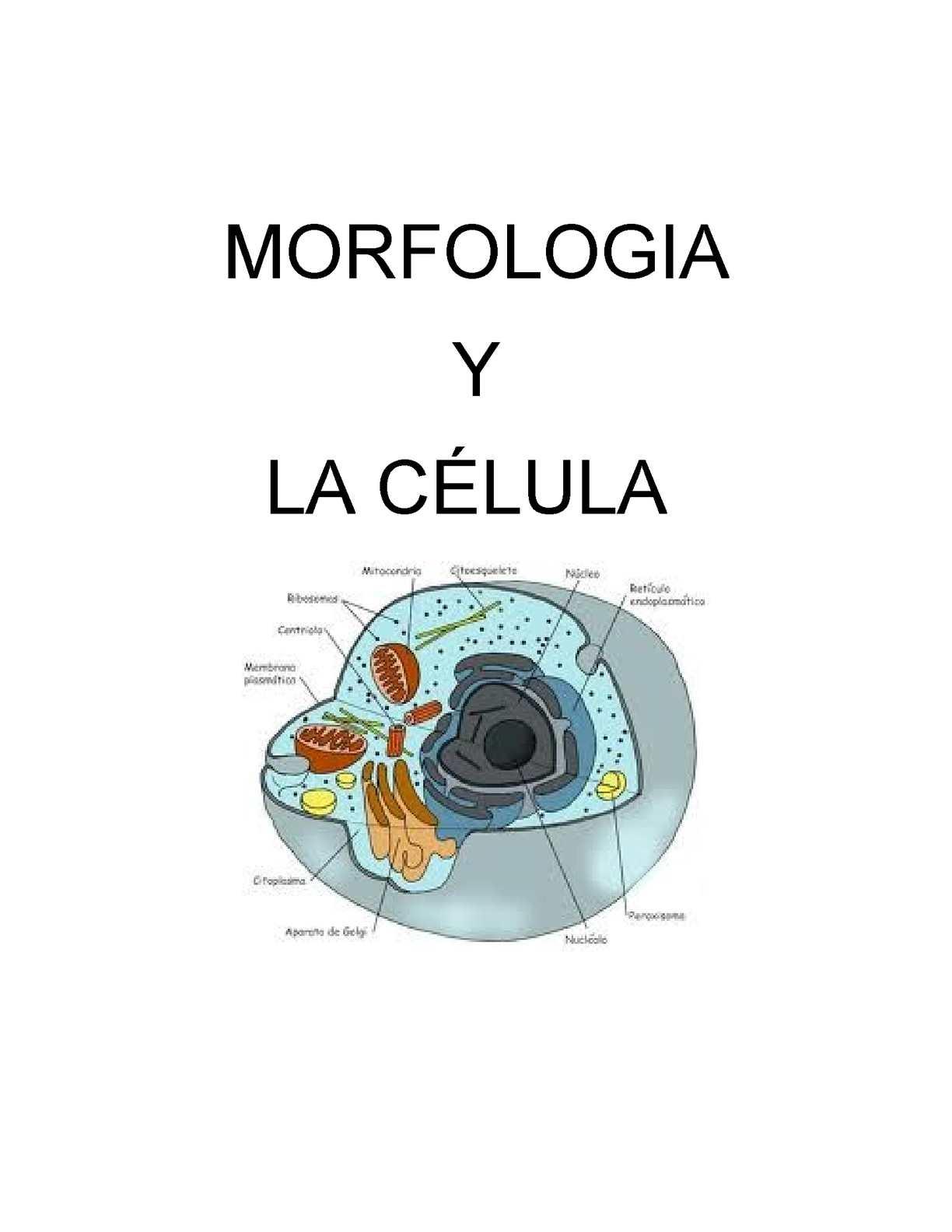Calaméo Morfologia Y Célula