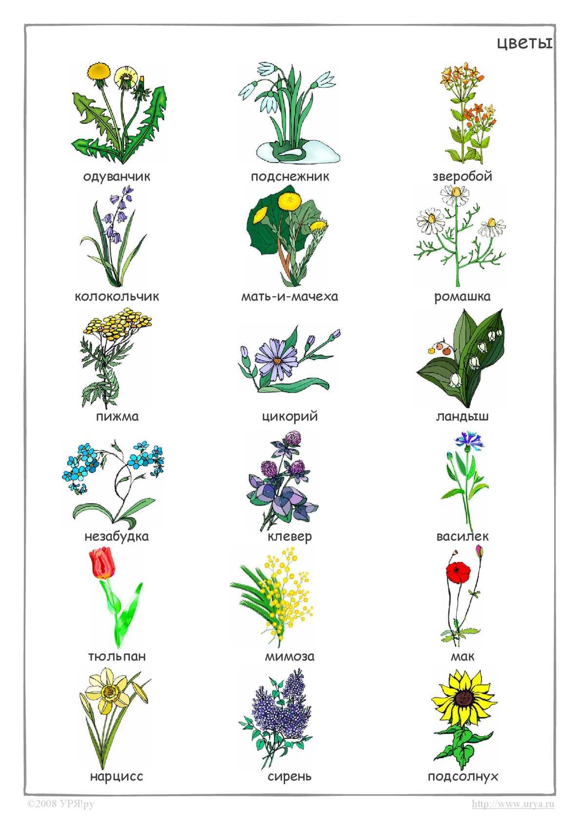 перечень цветов с картинками собраны