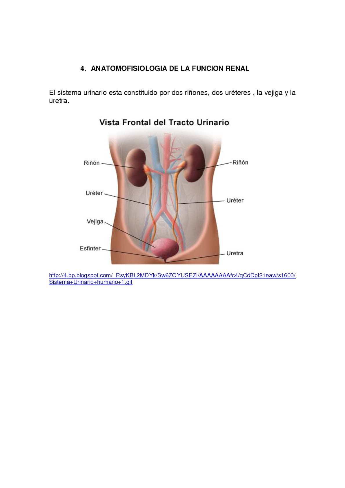 Como esta constituido el sistema urinario humano