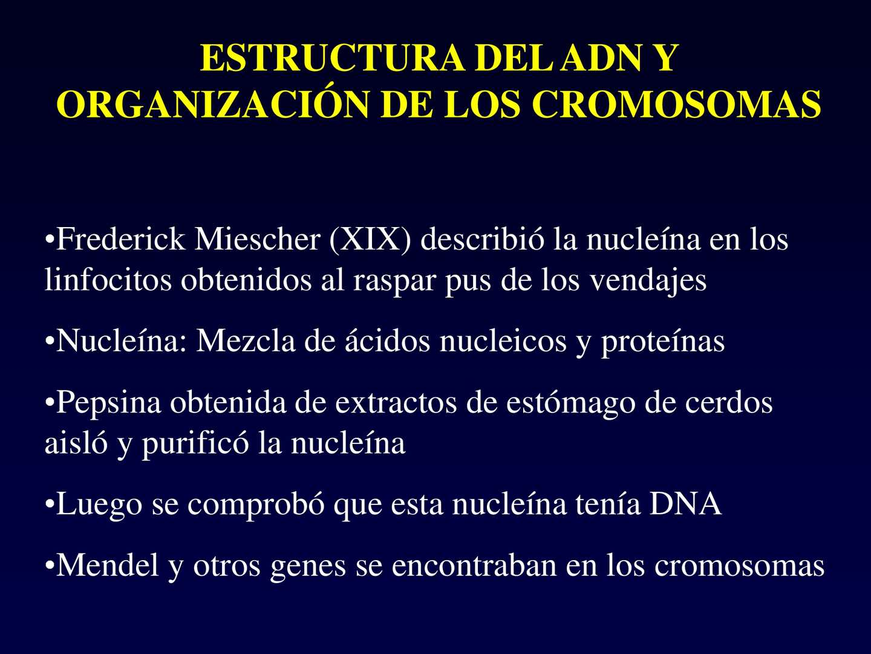 Calaméo Biología Estructura Adn Y Organización Cromosómica