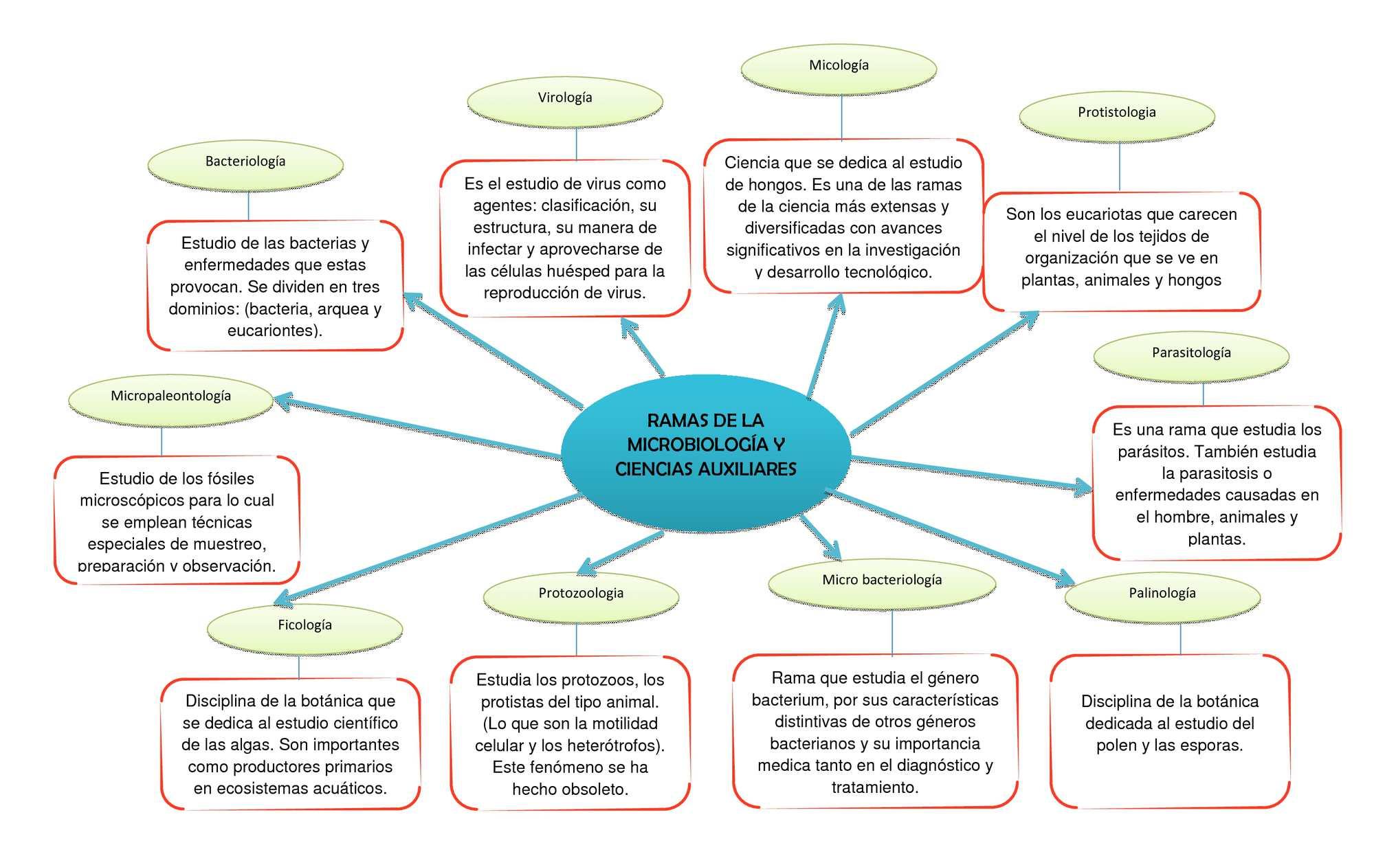 Calaméo Mapa Mental De La Microbiologia