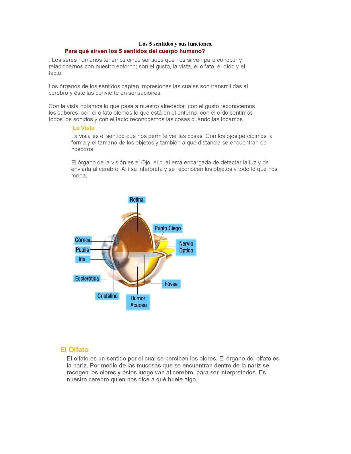 a461b72c93 Calaméo - Los 5 sentidos y sus funciones.