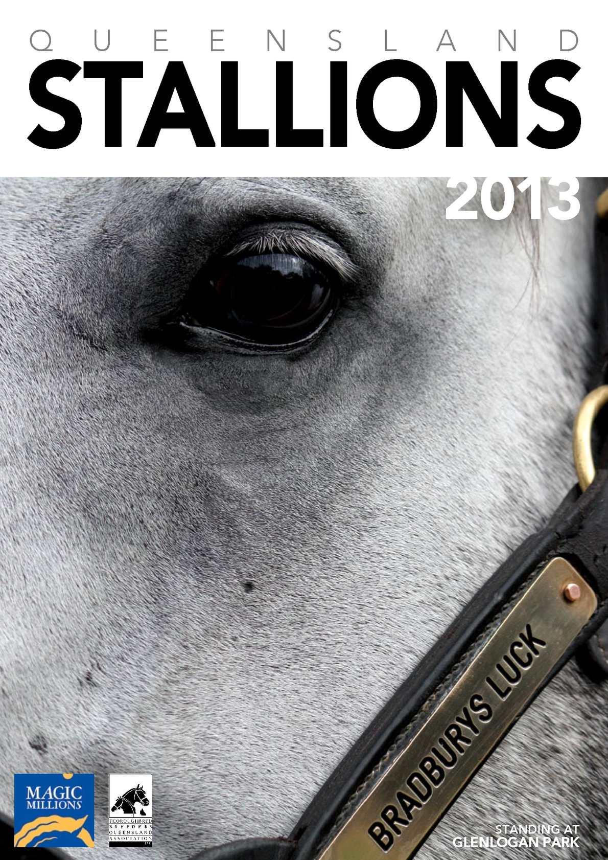 Calaméo - QLD Stallions 2013