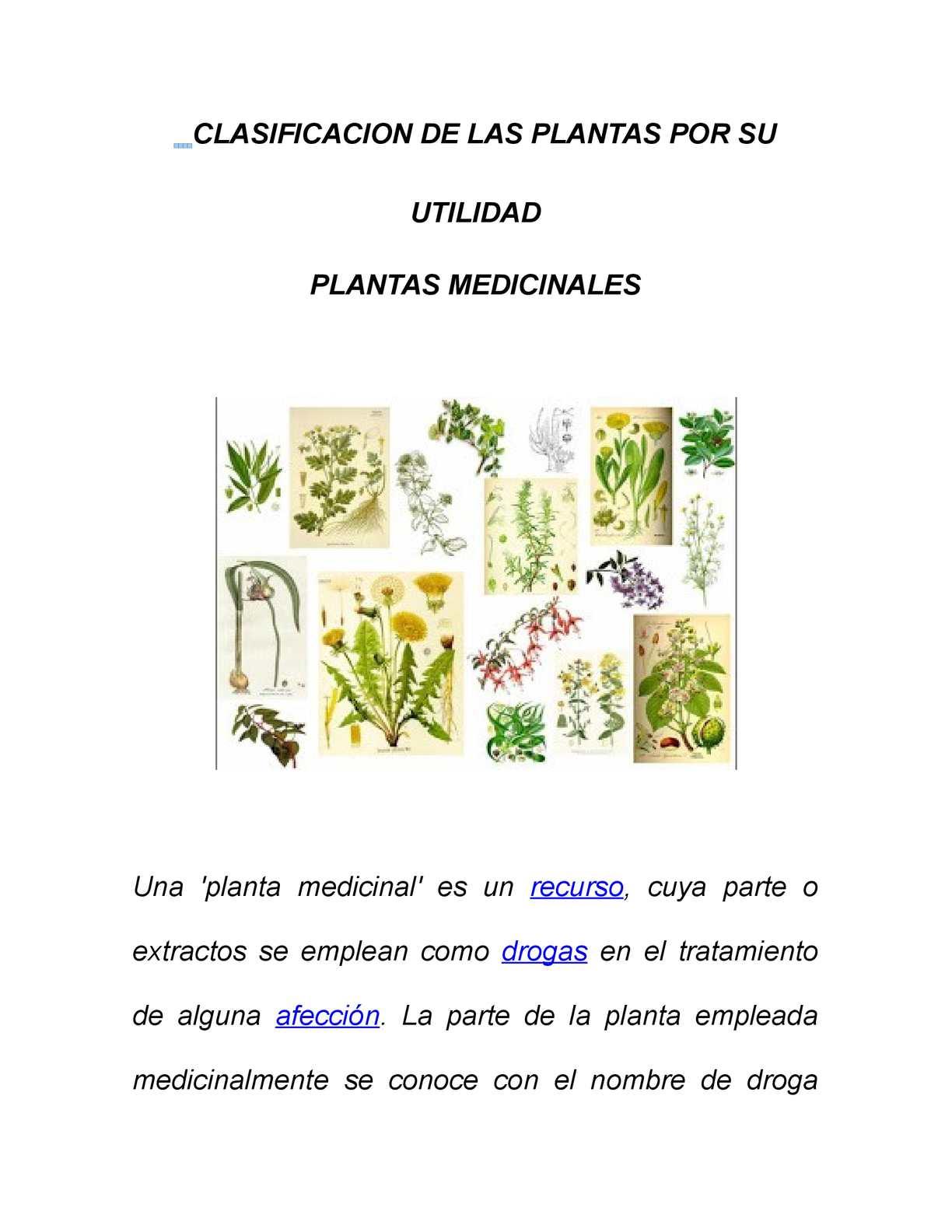 Calaméo Clasificacion De Las Plantas Por Su Utilidad