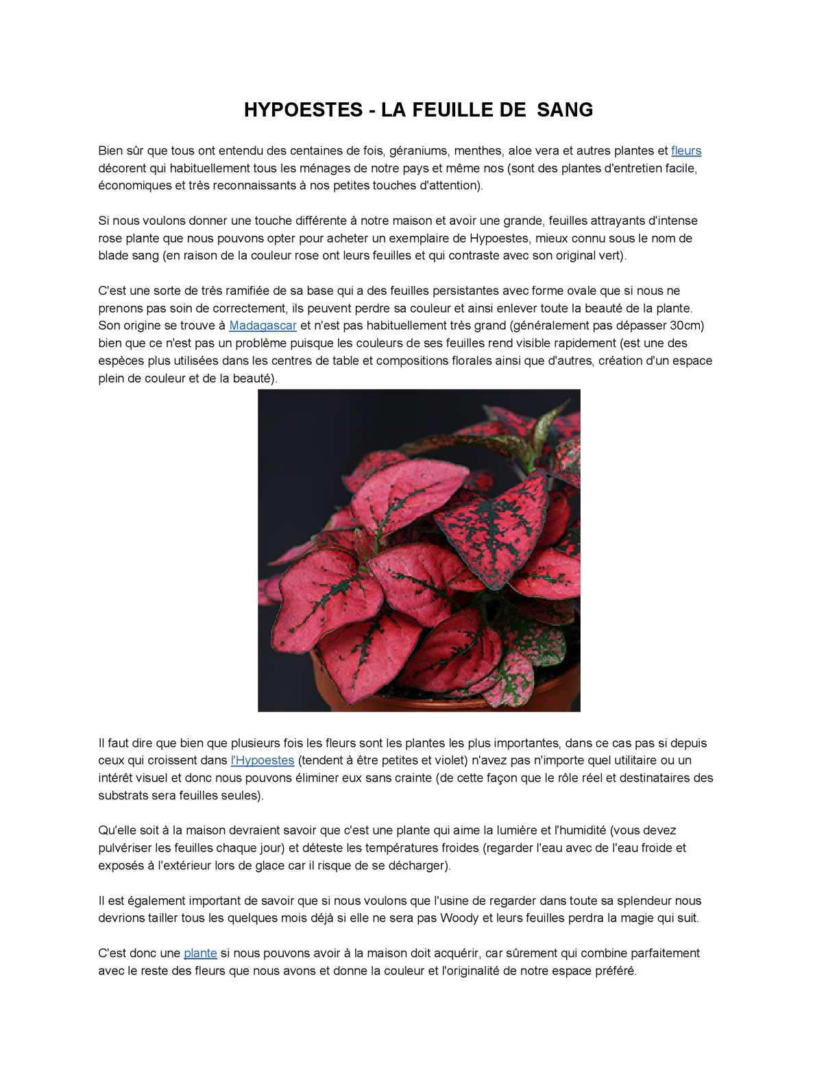 Plante Exterieur Qui Aime L Eau calaméo - hypoestes-lafeuilledesang