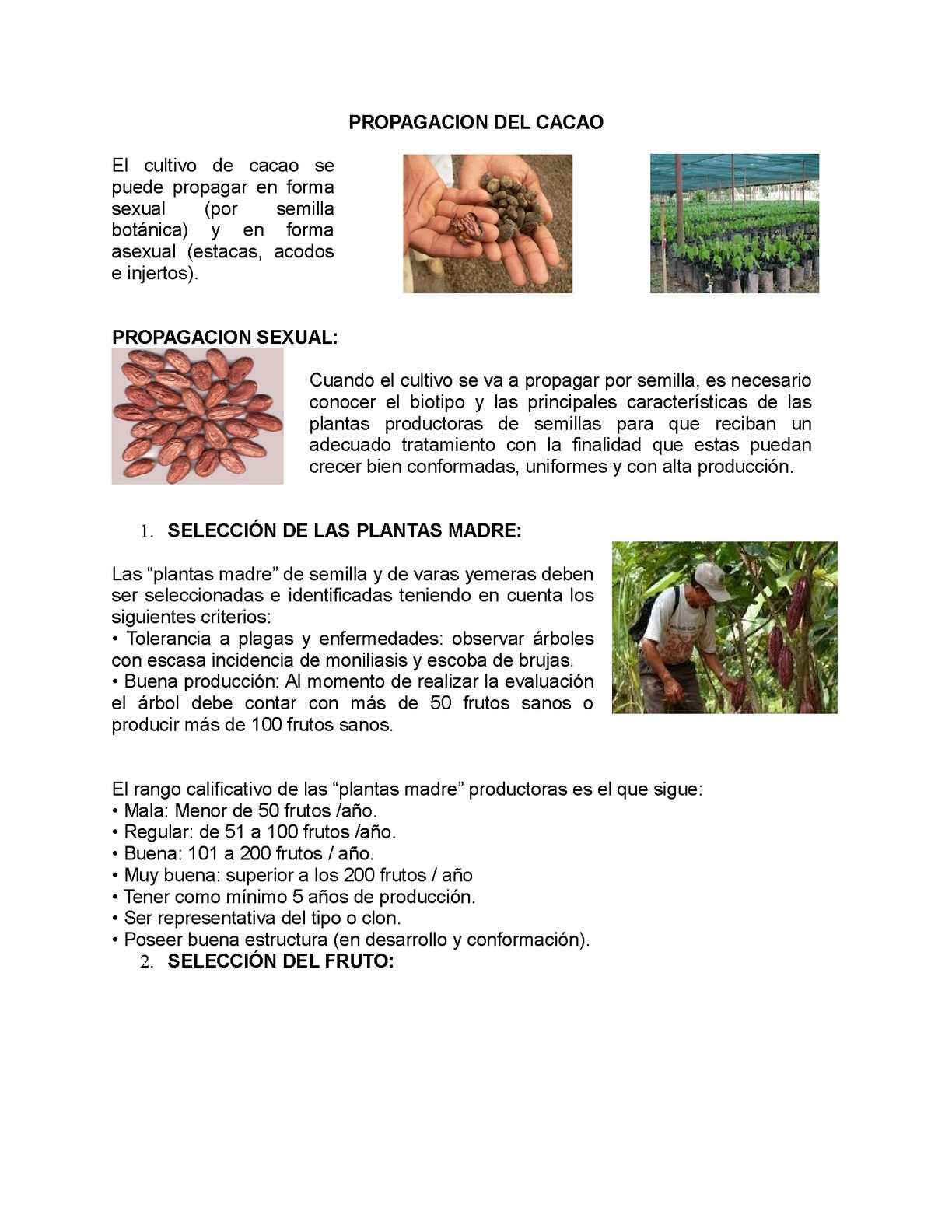 Calam o metodos de propagacion cultivo de cacao for En cuanto tiempo se cosecha la tilapia