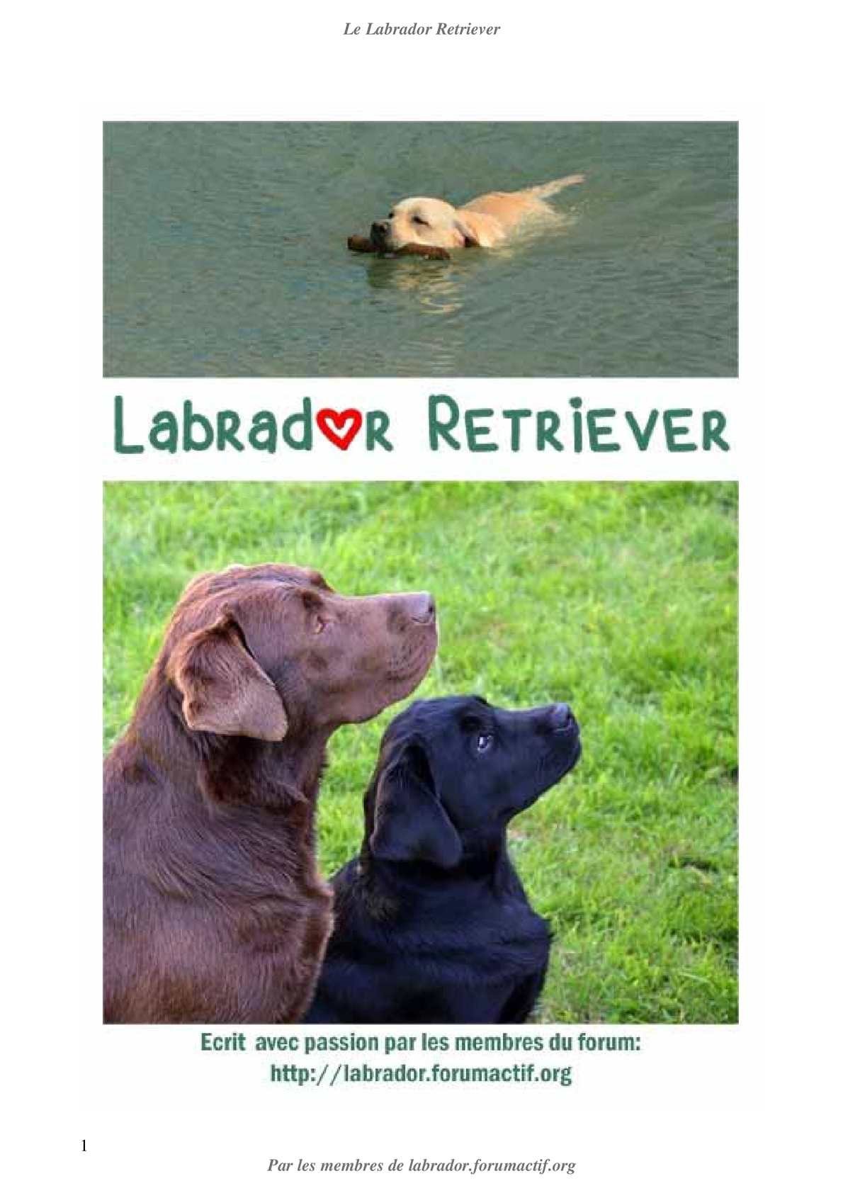 Le Labrador Tome Ii Calaméo Retriever f6I7vYbgy
