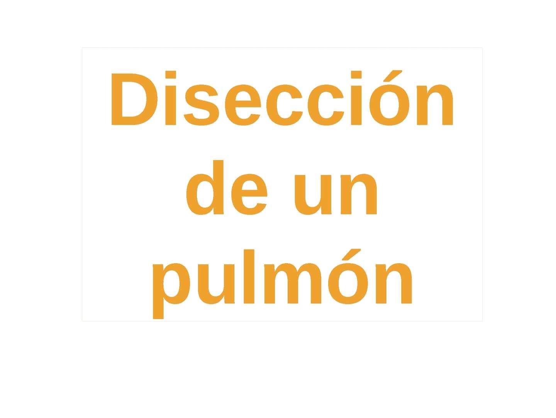 Disección de pulmón por Elena Gómez