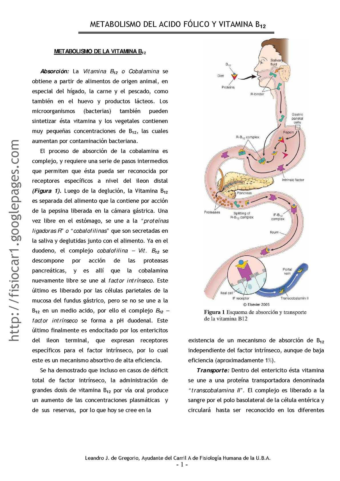 Calaméo - metabolismo ac. folico