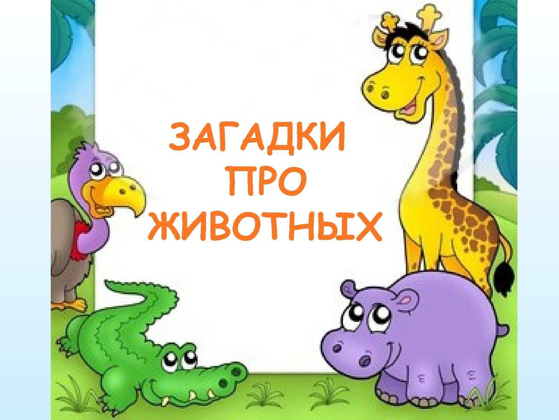 Картинки с животными с загадками