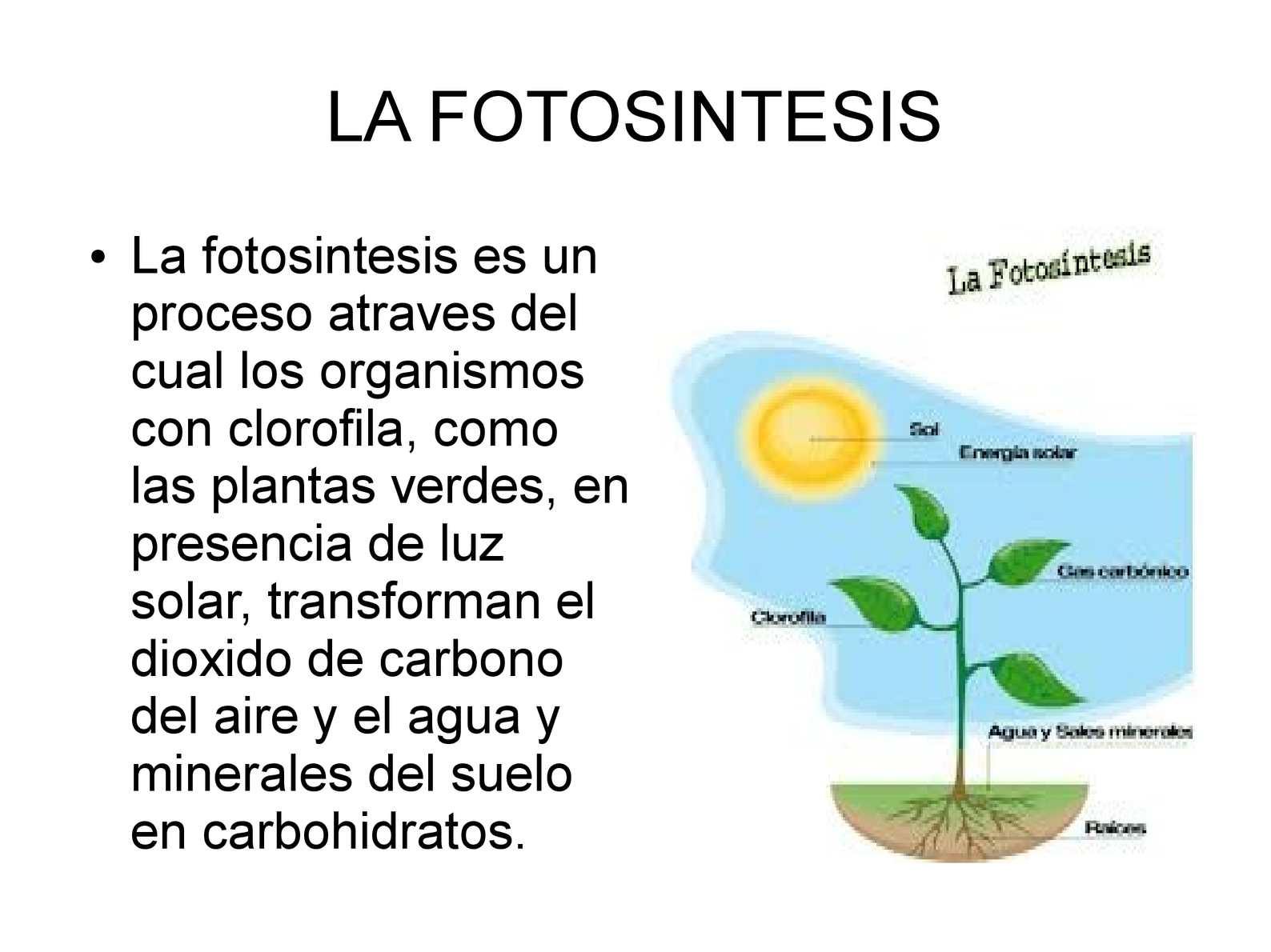 Calaméo - la fotosintesis