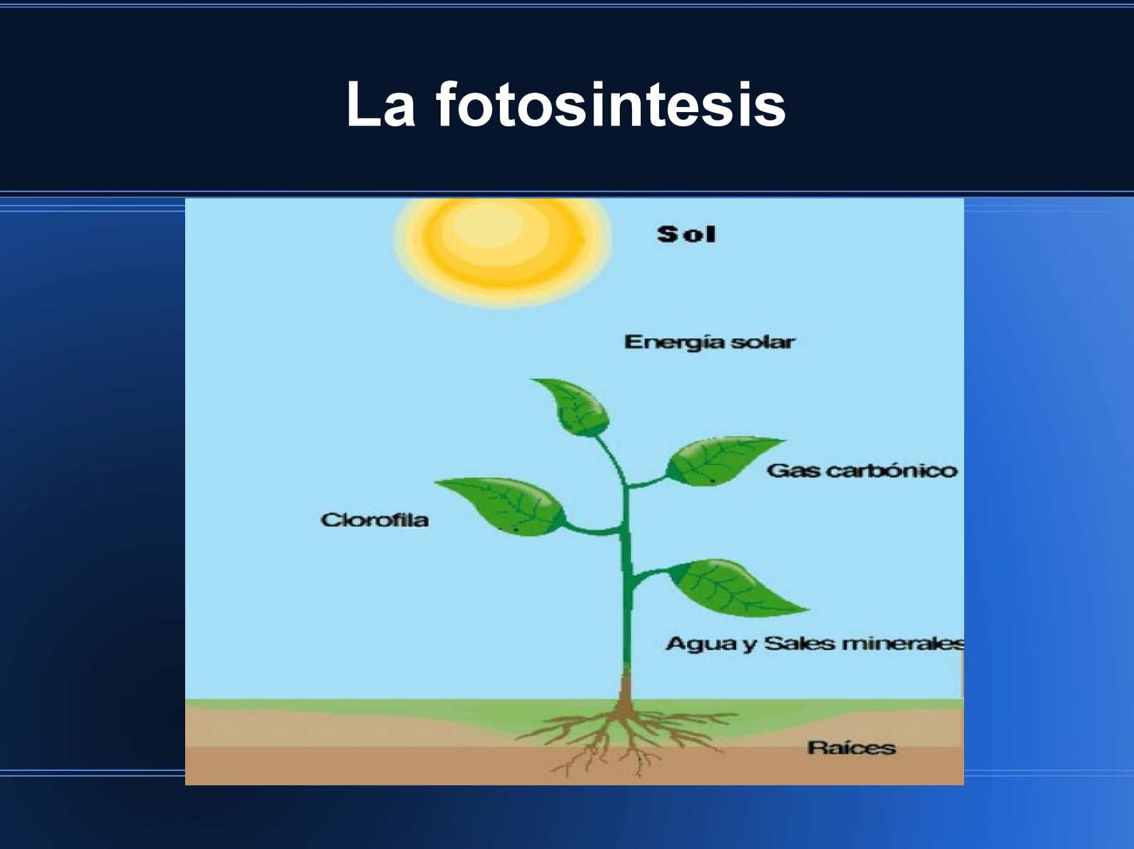 7 Penjelasan Perbedaan Fotosintesis dan Kemosintesis