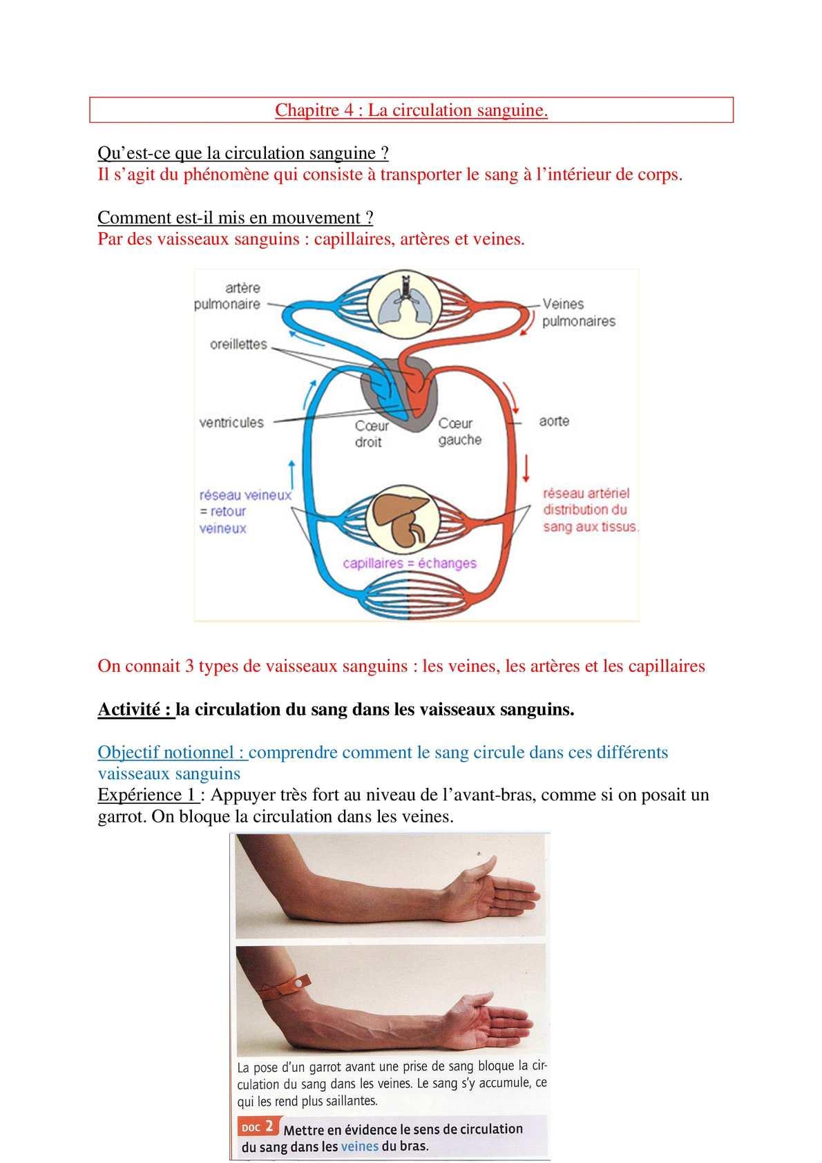 artere principale du coeur